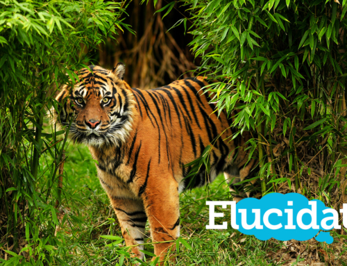 Les tigres utilisent Elucidat, et vous ?