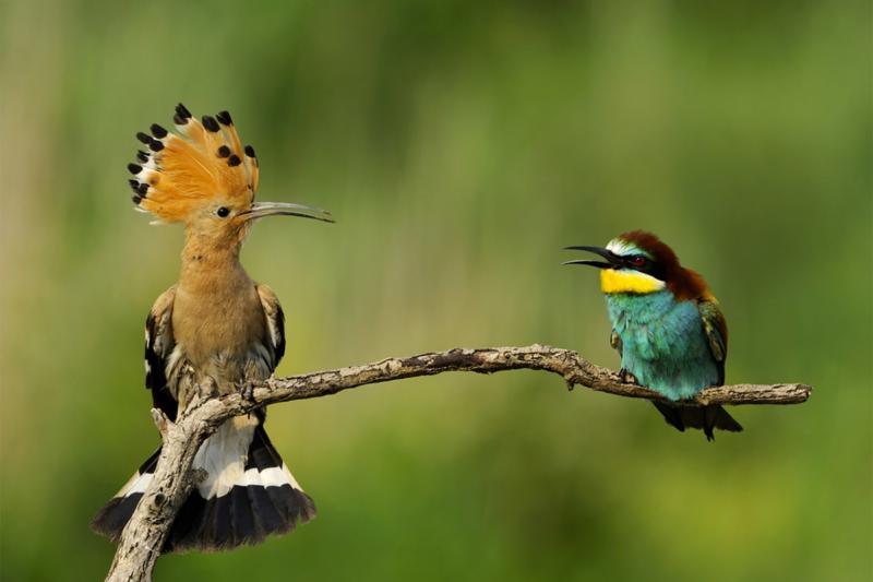 2 oiseaux sur une branche