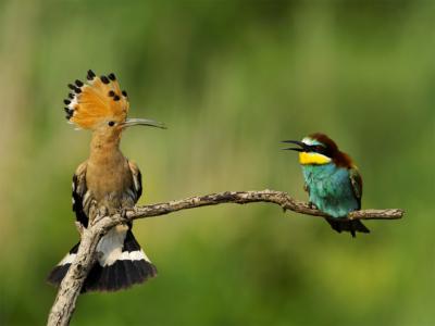 Oiseaux qui se regardent
